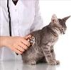 Ветеринарные клиники в Тулуне
